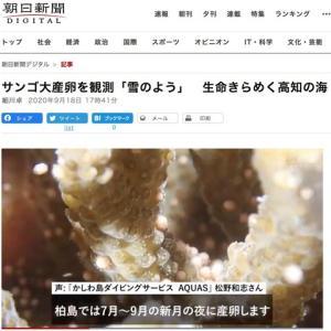 【朝日新聞】 サンゴ大産卵を観測「雪のよう」 生命きらめく高知の海