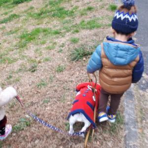 久々の犬散歩。