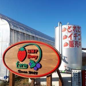 【越谷のHMPイチゴファーム】美味いイチゴ買いに行った!