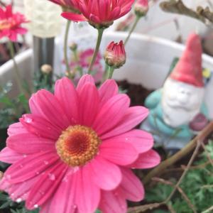 烏森神社。堀ちえみさんが癌封じの御守りをもとめお詣りされたそうです。
