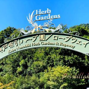 神戸の布引ハーブ園へ行ってきました