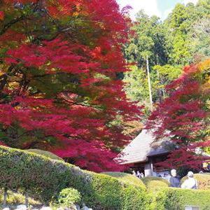 紅葉~黄葉~
