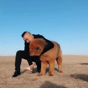 なぜ?!今年のツァガーンサルはモンゴルも、内モンゴルも同じ日に。