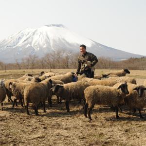 岩手県でモンゴル人が羊の多頭飼育に挑戦(仙台市・森修)