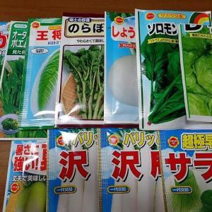 冬野菜第三弾種まき