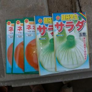 玉ねぎ播種