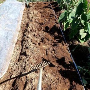 イチゴ畝作り