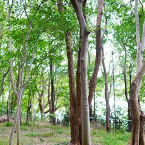 *伊丹市昆虫館 昆陽池公園
