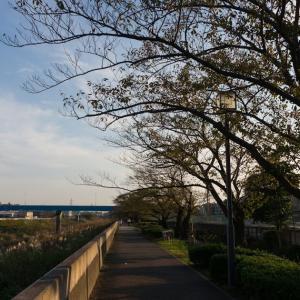 柏尾川(10/27 13km 78min)