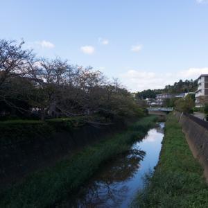 弥生台~いずみ中央~踊場(11/4 11.5km 56min)