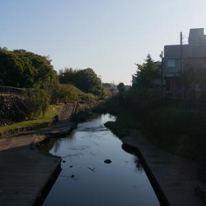 弥生台~いずみ中央~踊場(11/10 11.3km 66min)