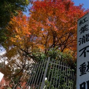紅葉瀧~本郷台~大船~戸塚(12/15 18.6km 92min)