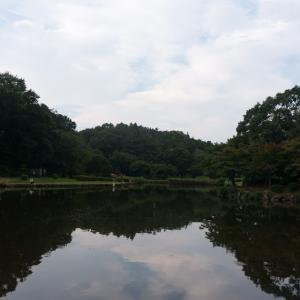 こども自然公園(8/9 11.6km 60min)
