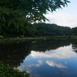 朝ジョグ:こども自然公園(8/27 11.7km 64min)
