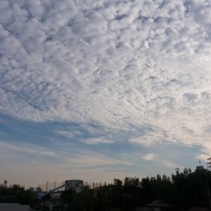 朝ジョグ:工業団地周回x6(10/28 10km 46min)