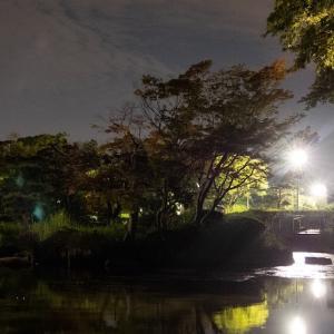 夜ジョグ:こども自然公園(9/10 10.9km 54min)