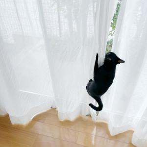 我が愛猫の数々の悪事