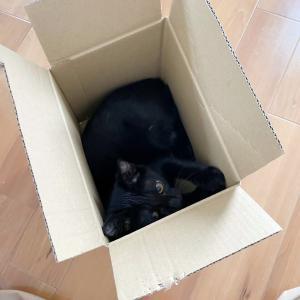 箱くれない猫。
