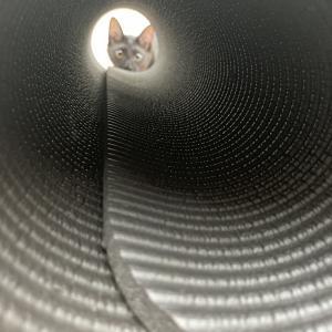 トンネルの向こう側。