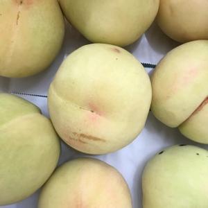 桃のコンポート作りと草取り