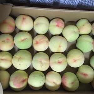 桃の季節がやって来ました♪