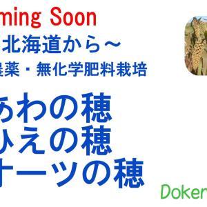 北海道から無農薬栽培