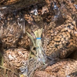 北海道から鳥さん用穂が入荷