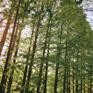 木々の緑がまぶしい 植物パワー