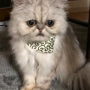 猫の腎臓病:リトルが何故天使になったのか?