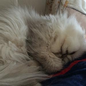猫の腎臓病:リトルへコメントの御礼と注意点
