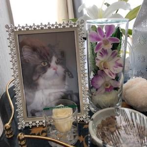 【猫の心臓病(心筋症)】カユガの最後の日