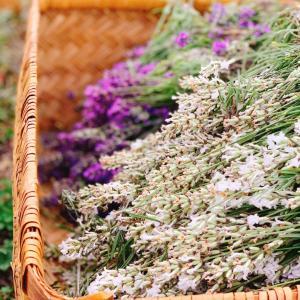 香り成分は植物のメッセージ