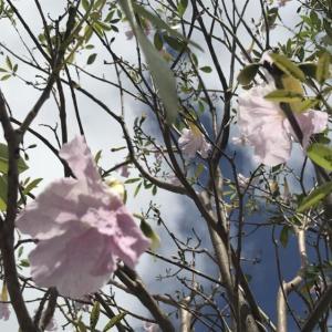 街路樹の花♪