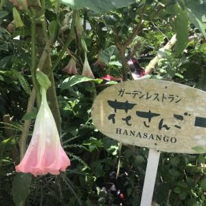 ガーデンレストラン花さんごさん♪