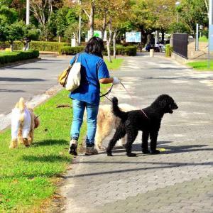 懐かしき東扇島でお散歩。