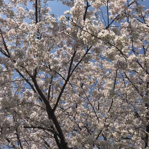 いろんな春