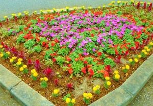 花木いっぱいボランティア