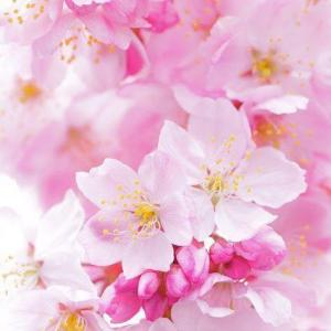 ピンク〜あなたは愛されるに値する