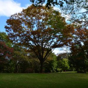 秋・木の実が鮮やか・・逢瀬自然公園