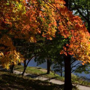 秋色満開・・いつもの散歩道