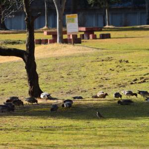 平日の公園は野鳥たちの・・「井戸端会議」