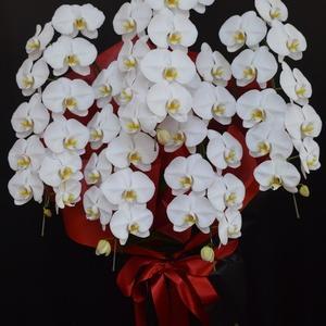 開店祝いの胡蝶蘭 沖縄の花屋