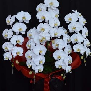 胡蝶蘭5本立ち 移転のお祝の胡蝶蘭 花屋アレンジマニア