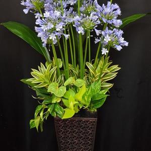 沖縄県で定期納品のお花の配達。花屋。