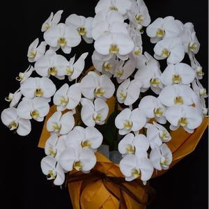 スタンド花・沖縄の花屋アレンジマニア
