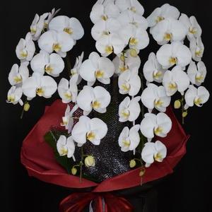 胡蝶蘭白5本立ち 沖縄の花屋アレンジマニア