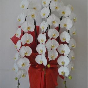 沖縄県で開店祝いの胡蝶蘭の配達。花屋アレンジマニア。