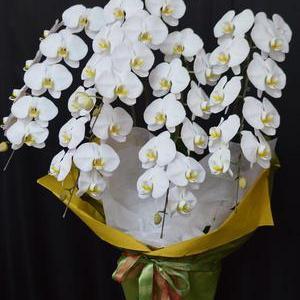 胡蝶蘭の配達・沖縄の花屋アレンジマニア