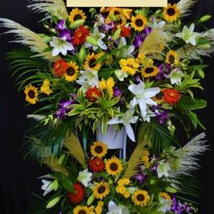 胡蝶蘭・沖縄県のお花屋さん 開店祝いなどに