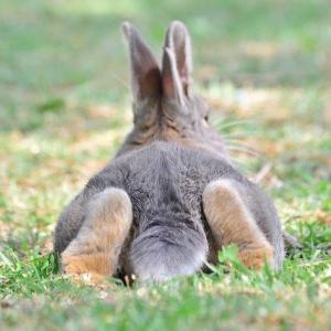 新・ウサギとカメの物語? 笑